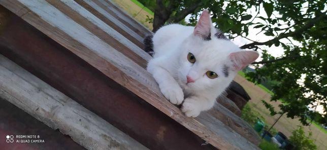 Zaginął roczny kociak