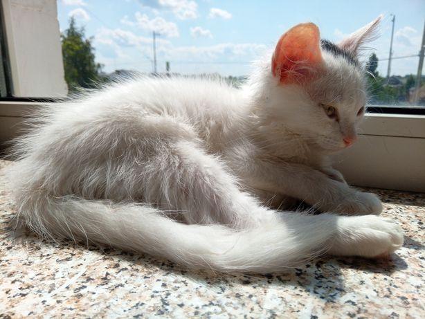 Солнечный котенок в добрые руки