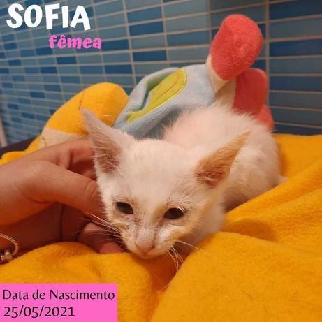 Gatinha branca 2 meses para adoção (Sofia)
