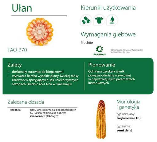 Nasiona Kukurydzy Podlasiak Smolitop Lokata Boryna Rataj Finezja Ułan