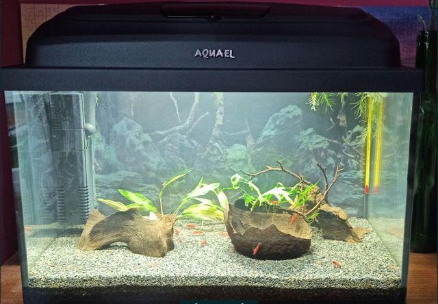 Akwarium 25 litrów, oświetlenie LED, tło