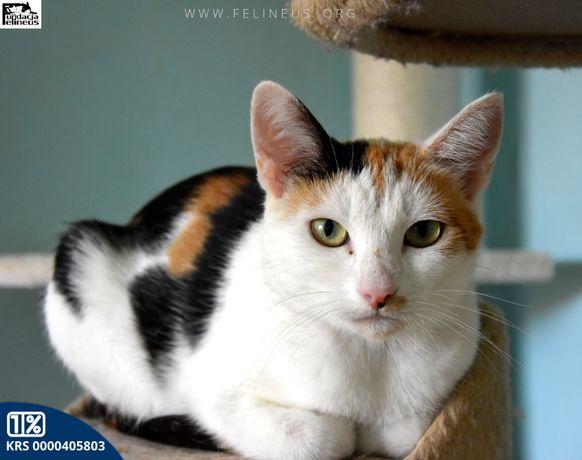 Wysterylizowana, młoda kotka