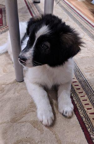 Милый щенок, мальчик 2.5 месяца, ищет хозяев