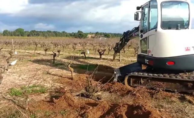 Arrancamos cepas antigas e fazemos limpeza de terrenos