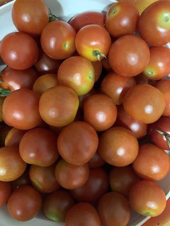 Tomates cherrie biologicos