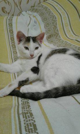 Две кошки, возраст 6 месяцев