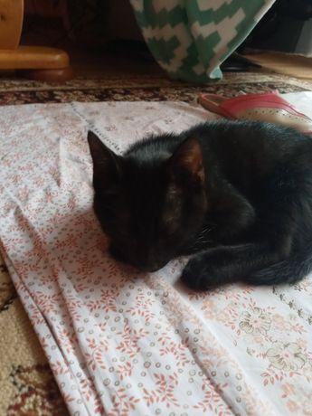 Kot bez rodowodu