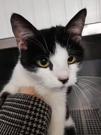 Przepiękna koteczka szuka domu stałego