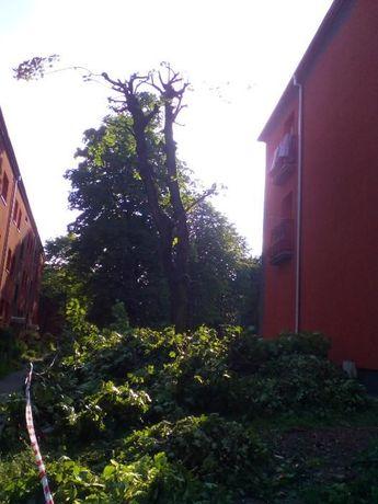 Wycinka drzew, alpinistycznie, zwyżka rębak, usuwanie korzeni
