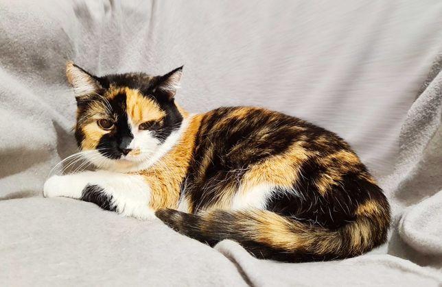 Кішечка Тріксі. 1 рік. Розумниця, красуня, що приносить щастя. Кішка.
