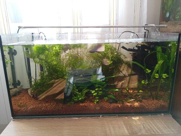 Akwarium z życiem