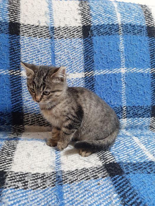 Віддам кошенят у добрі руки Калуш - изображение 1