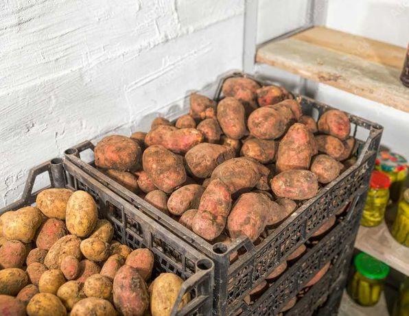 ŚWIEŻE warzywa z WŁASNEJ uprawy NISKIE CENY DOWÓZ ziemniaki cebula itp
