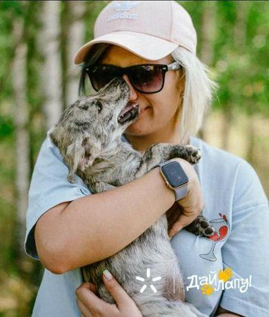 Кроха Ася ищет своего человека щенок щенки щенята пес щеночки собака