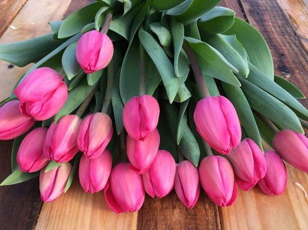 Оптом тюльпаны к 8 марта