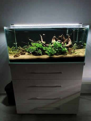 """Akwarium 140l z całym wyposażeniem i ,,życiem"""""""