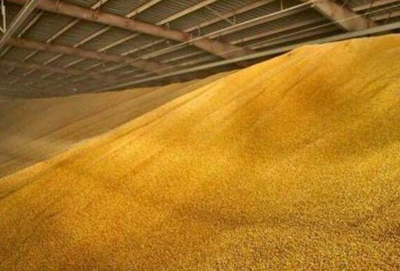 Кукурудза, чиста, суха 2,5т