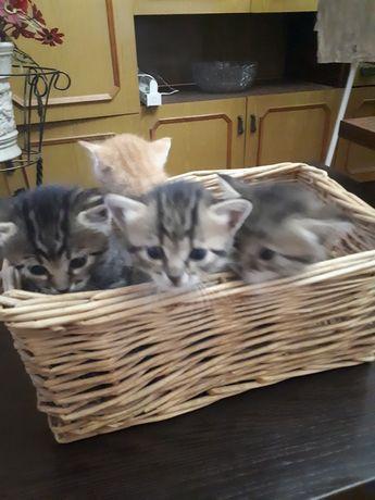 отдам котят в семью