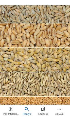 Продам зерно: ячмінь , пшениця, кукурудза.