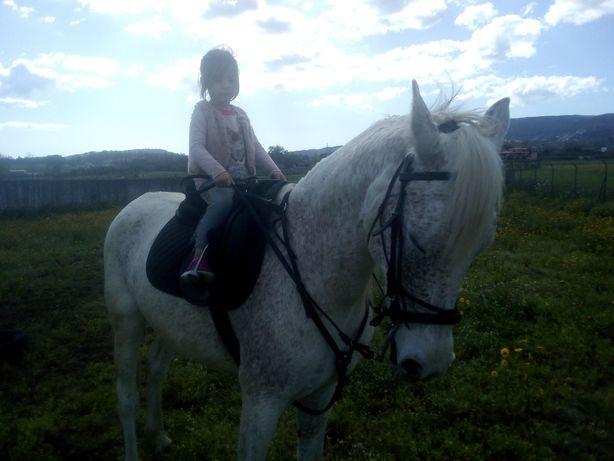 Troco por egua/ pónei emgatado