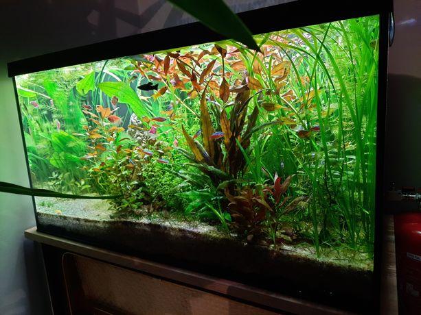 Akwarium aquael 100 l filtr kubełkowy hydor