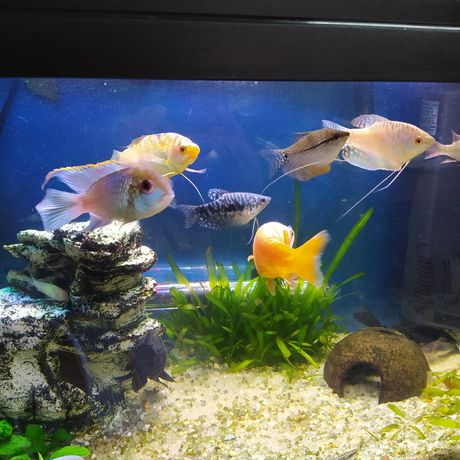 Vários Peixes - Água Quente
