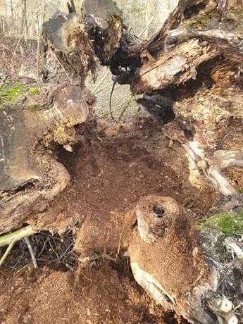 Drzewo (wierzba) na domek dla psa, ławę