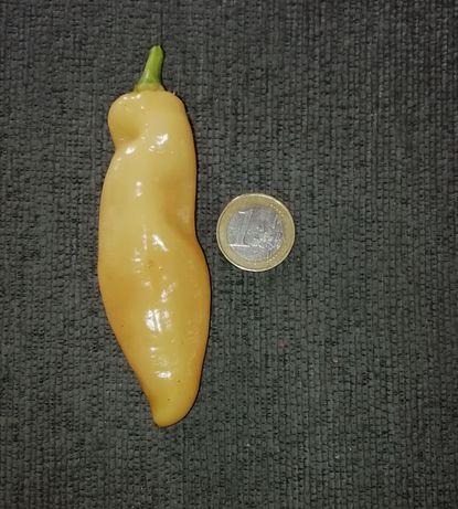 Vendo sementes, malagueta fresca ou planta de Sugar Rush Peach
