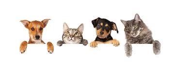 Petsitting/Dogwalking