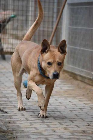 Hugo - w typie TTB; psi anioł, który pragnie towarzystwa człowieka