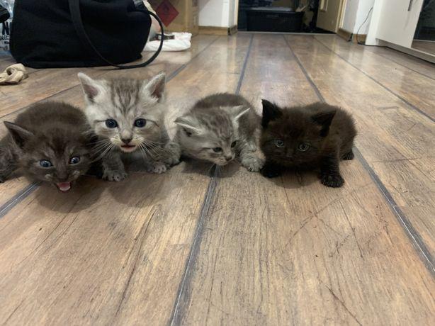 Oddam kotki małe