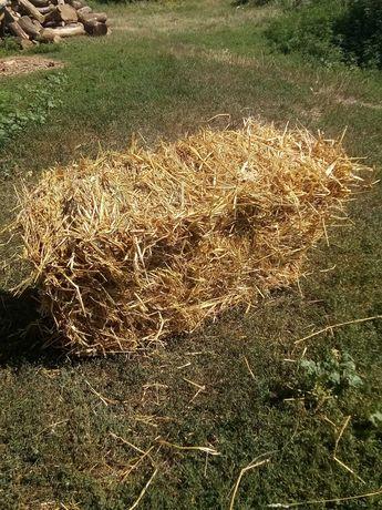 Солома в тюках пшенична ячмінну