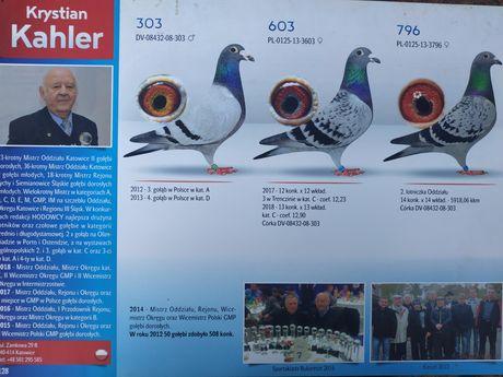 Krystian Kahler sprzeda młode gołębie pocztowe