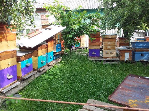 продам пчел карника