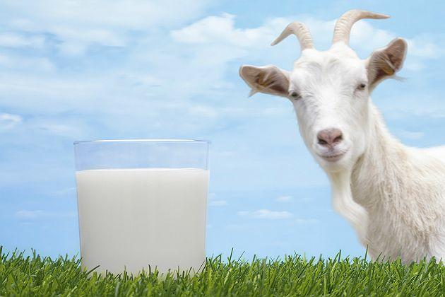 Молоко козье (козине) в Киеве
