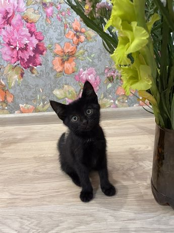Отдам красивого котенка