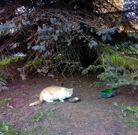 Kot, czy ktoś szuka ?