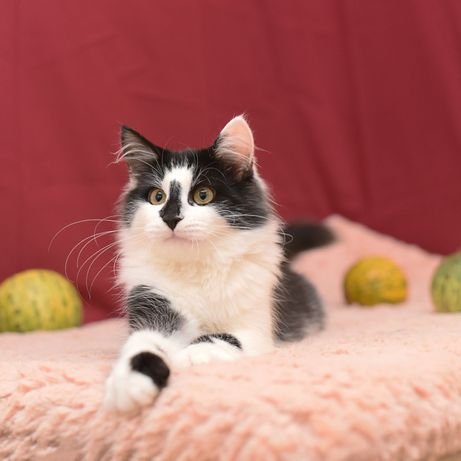 Ласковый кот Сенечка ищет семью