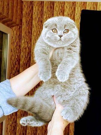 Волшебные котята