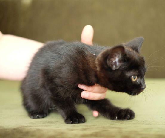 Чемне домашнє кошеня
