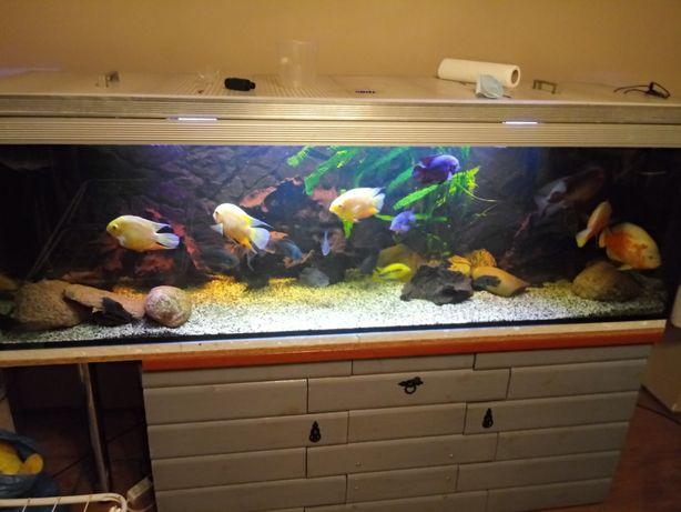 Zestaw akwarium 720l filtr grzałka obsada korzeń