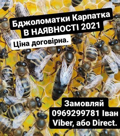 Бджоломатки Карпатка 2021 В НАЯВНОСТІ