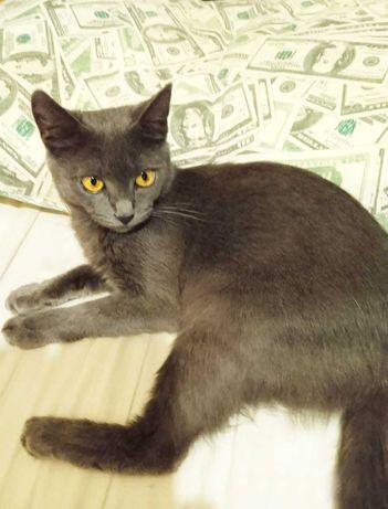 Русская голубая кошечка Киара, девочке 6 месяцев, ищет семью, кошка