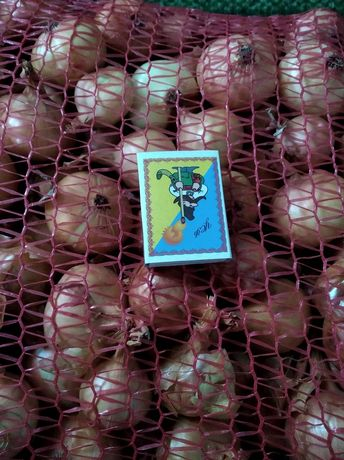 Продам цибулю (лук) штутгарт на перо
