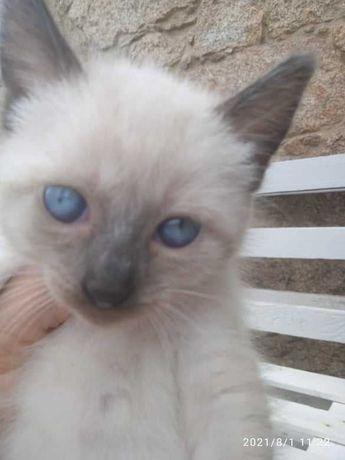 5 gatinhas femêas para adoção responsável