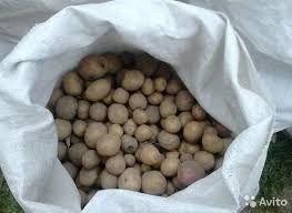 Картопля дрібна -