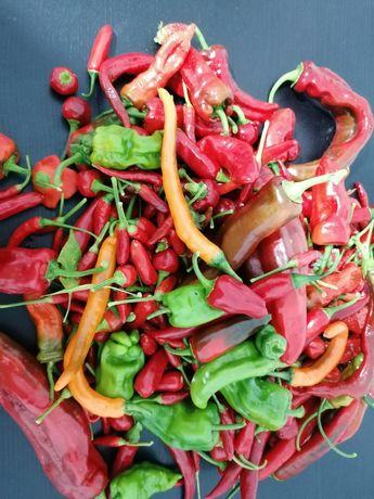 Sementes de pimentas (embalagem de 10 sementes)