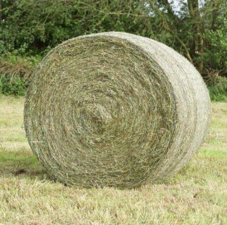 Siano Sianokiszonka bele z traw polnych