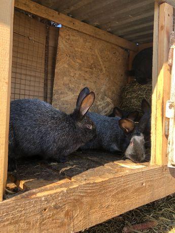 Продам кролики різних порід