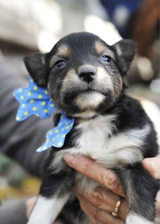 Щенок мальчик 1 месяц в добрые руки! Киев и область